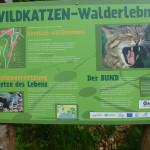 Wildkatzen Walderlebnis